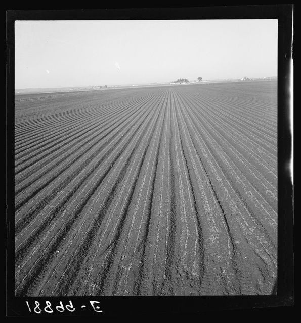Salinas Valley, California. Large scale, commercial agriculture. This single California county (Monterey) shipped 20,096 carlots of lettuce in 1934, or forty-five percent of all carlot shipments in the United States. In the same year 73.8 percent of all United States carlot shipments were made from Monterey County, Imperial Valley, California (7,797 carlots) and Maricopa County, Arizona (4,697). Production of lettuce is largely in the hands of a comparatively small number of grower-shippers, many of whom operate in two or all three of these Counties. Labor is principally Mexican and Filipino in the fields, and white American in the packing sheds. Many workers follow the harvests from one valley to the other, since plantings are staggered to maintain a fairly even flow of lettuce to the Eastern markt throughout the year