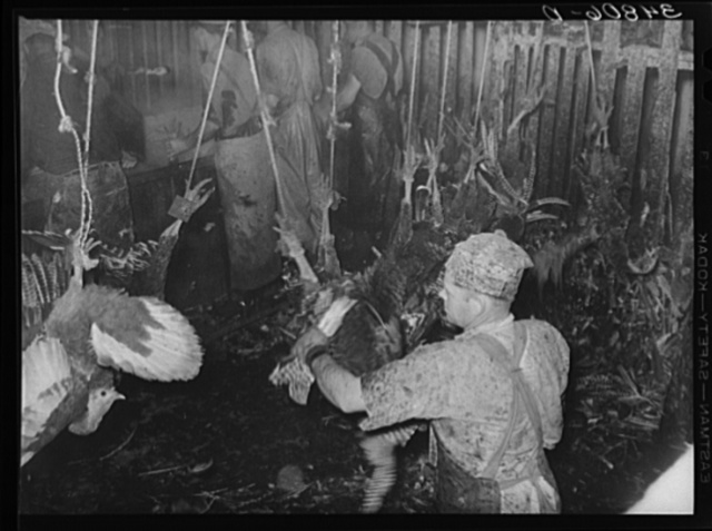 Scene in the turkey killing stall. Man in foreground is removing wing feathers; men in background are scalding the turkeys. Cooperative poultry house, Brownwood, Texas