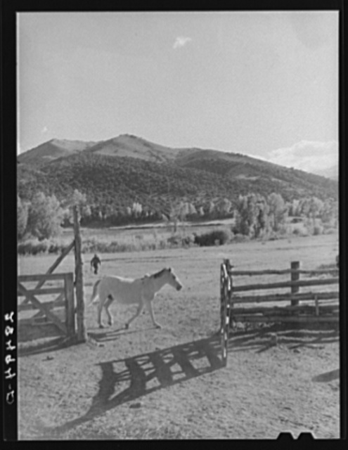 Scene on the farm of Ellsworth Painter, FSA (Farm Security Administration) rehabilitation client. Chaffee County, Colorado