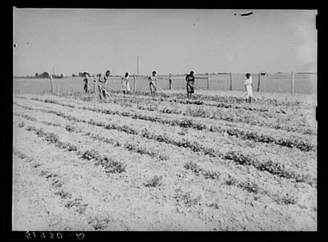 School garden, produced by NYA (National Youth Administration) girls, with the help and guidance of Mr. Ellis Whitaker, vocational director and principal of school. Flint River Farms, Georgia