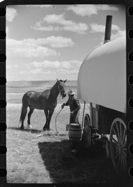 Sheepherder tying his horse to chuck wagon [i.e., sheepherder's wagon], Madison County, Montana