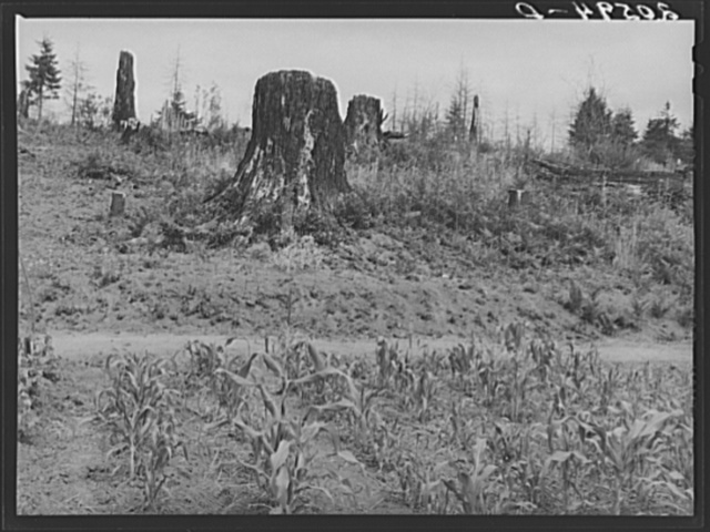 Shows charater of the land in the hills surrounding Elma. Western Wasington, Grays Harbor County, three miles north of Elma. See general caption number 38
