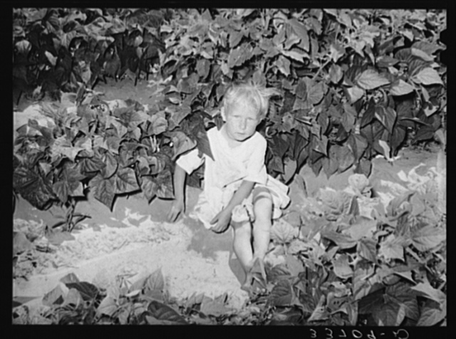 Small child playing in the scant shade of weeds and bean plants near Muskogee, Oklahoma. She had accompanied her elder sister to the bean patch because it was cooler there than in the potato fields where the mother was working