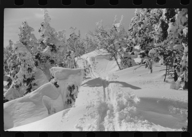 Snow-covered trees and ski trail on top of Mount Mansfield, Smuggler's Notch, near Stowe, Vermont