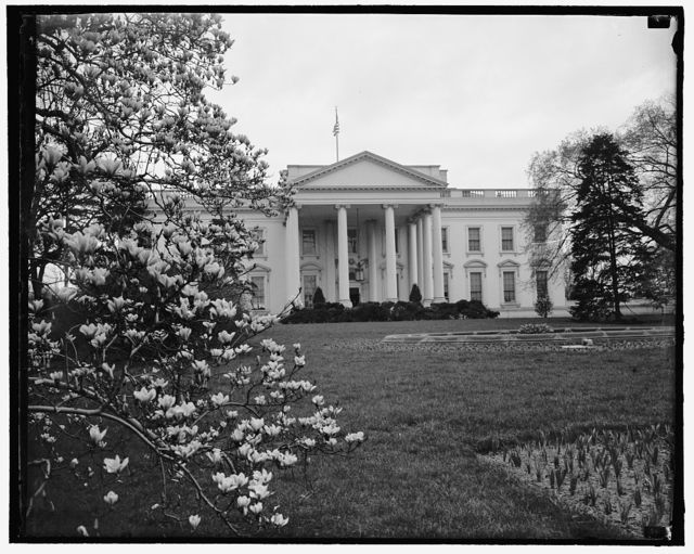Springtime at White House. Washington, D.C., March 28. A springtime picture of the White House, showing the Magnolia Blossoms on the left. Thousands of visitors visit the Executive mansion at this time of year. 3-28-39