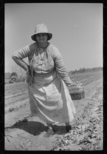Strawberry pickers near Lakeland, Florida (see general captions no. 3 and no. 4)