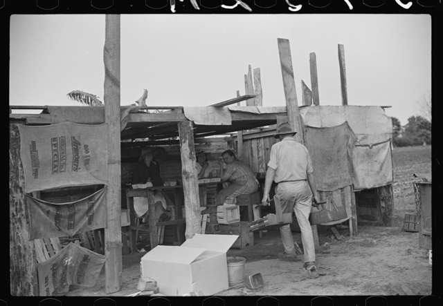 Strawberry pickers near Lakeland, Florida (see general captions no. 3 and no. 4)