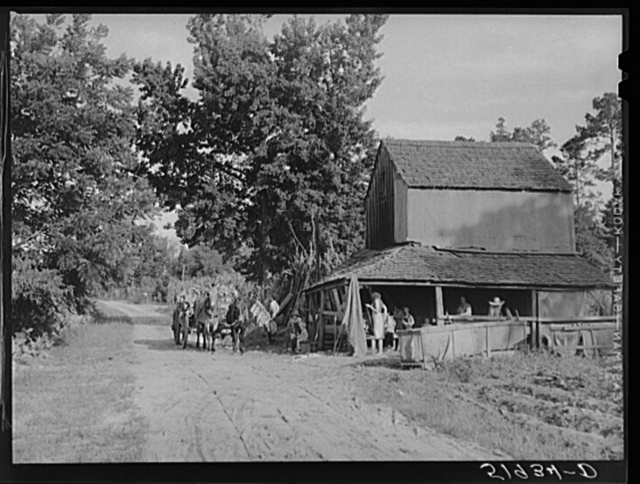 Stringing tobacco to go into curing house. Manning, South Carolina