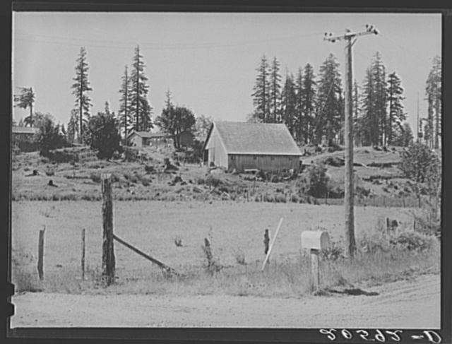 Stump farm. Typical of cut-over area of Western Washington. Lewis County, near Vader