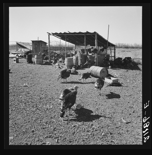 Temporary buildings on Williams' new farm. Dead Ox Flat, Malheur County, Oregon. General caption number 67-111