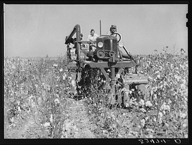 The rust cotton picker in field at Clover Hill Plantation, near Clarksdale, Mississippi Delta