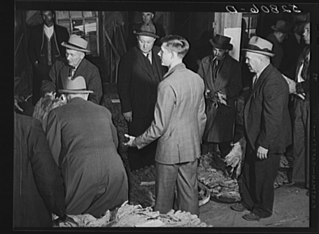 The son of an older tobacco auctioneer relieves his father at the end of the row during sale. Mebane, Orange County, North Carolina
