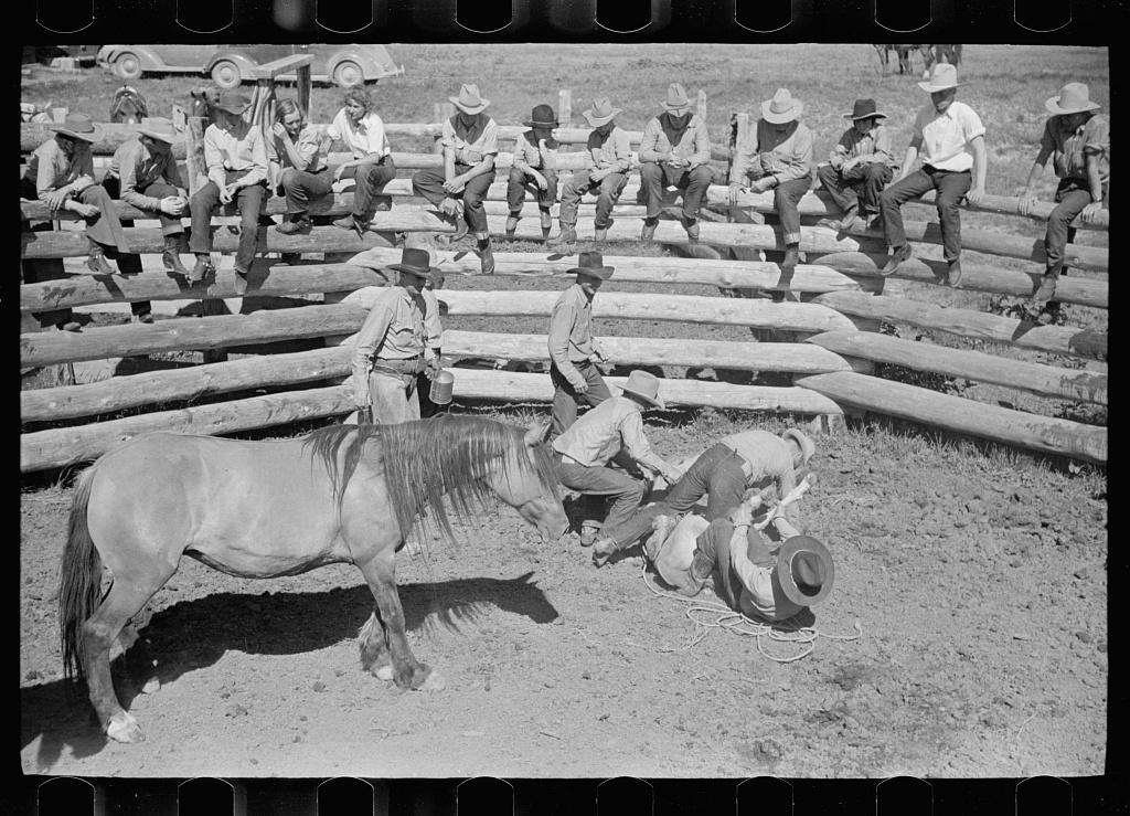 Throwing a colt for branding, Quarter Circle U roundup, Montana