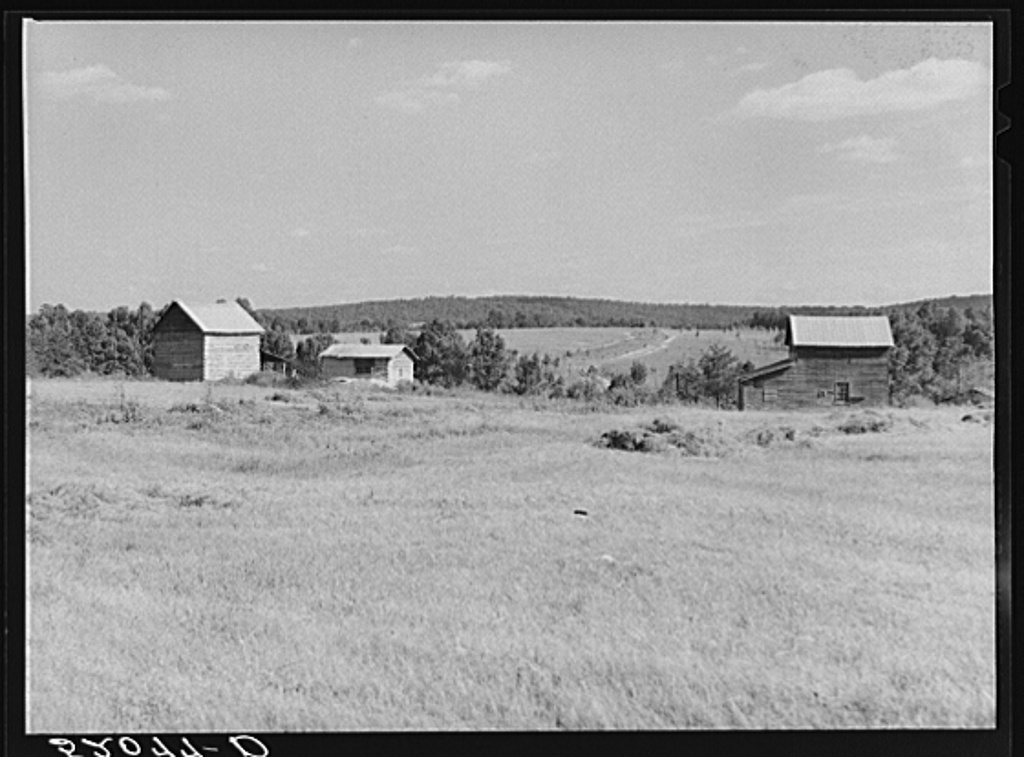 Tobacco barns and strip house on the Ward Place, Chatham, Route 57, going east on right side of road. Pittsylvania County, Virginia