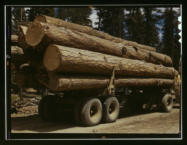 Truck load of ponderosa pine, Edward Hines Lumber Co. operations in Malheur National Forest, Grant County, Oregon