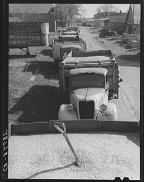 Trucks loaded with shelled corn at grain elevator. Grundy County, Iowa
