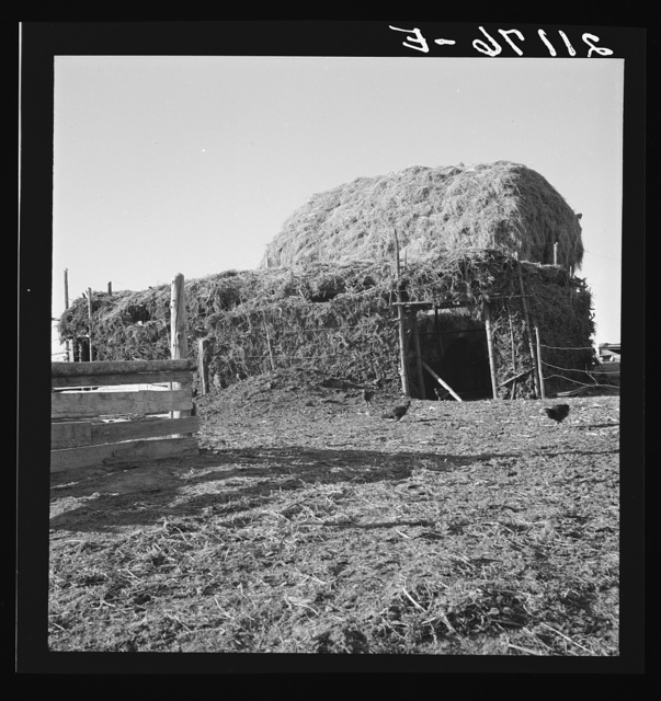 Two-year old barn, sage bush thatched (name: Hull). Dead Ox Flat, Malheur County, Oregon. General caption number 67-111
