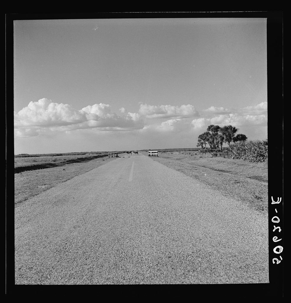 Typical Florida country near Moorehaven