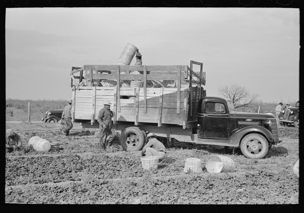 Unloading baskets from truck in spinach field, La Pryor, Texas