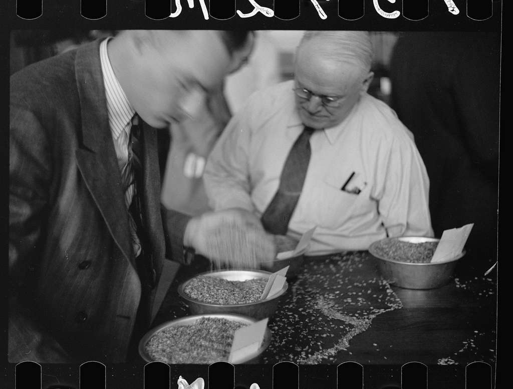 Untitled photo, possibly related to: Buyer examining oat samples at open market, Minneapolis Grain Exchange, Minnesota