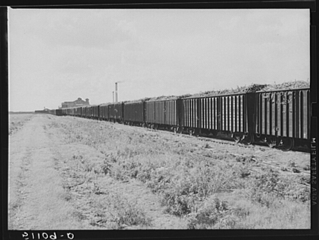 USSC (United States Sugar Corporation) hauls sugarcane from the fields to its mill by their own railroad system.  Clewiston, Florida