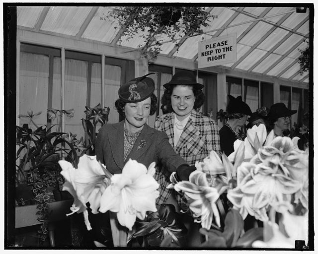 View amaryllis show. Washington, D.C., March 28. Among today's visitors at the Amaryllis Show staged by the Department of Agriculture were Senora Felipe A. Espil, left, wife of the Argentine Ambassador, and Jean Wallace, daughter of the Secretary of Agriculture and Mrs. Henry A. Wallace. 3-28-39