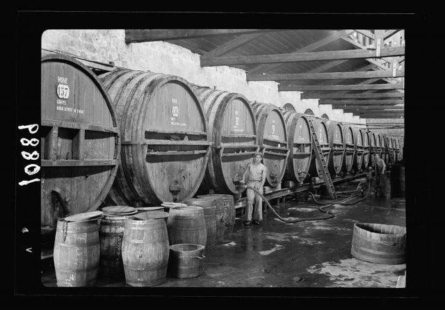 Vintage activities at Richon-le-Zion, Aug. 1939. Row of large wine barrels being filled with new wine (fermentation rooms)