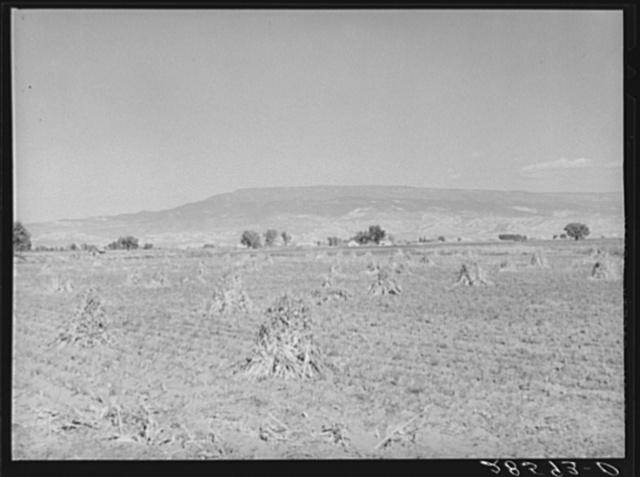 Vista of Western Slope Farms, Colorado