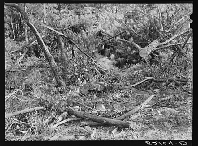 Waste wood. Note large size which would make good firewood. Left on site of small abandoned sawmill, recently moved between Antioch Church and Highway 54. Southern part of Orange County, North Carolina. See general caption notes on subregion. September 27, 1939. Number two and caption 52101-D
