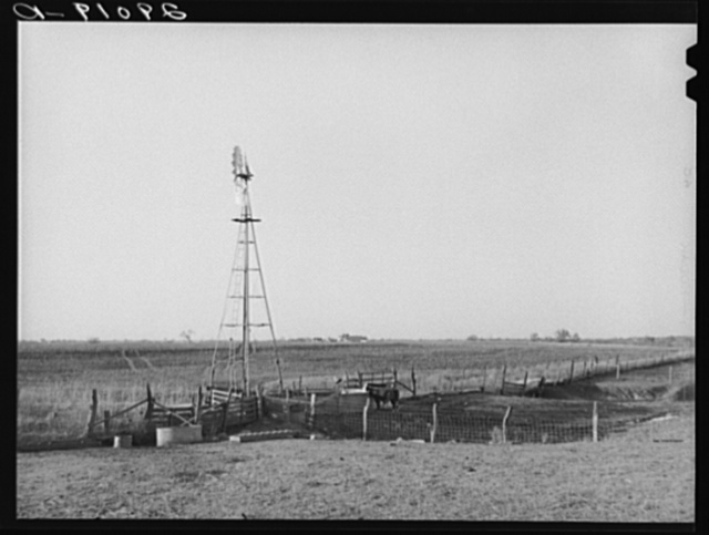 Watering tank for feeder cattle. Bois d'Arc Cooperative. Osage Farms, Missouri