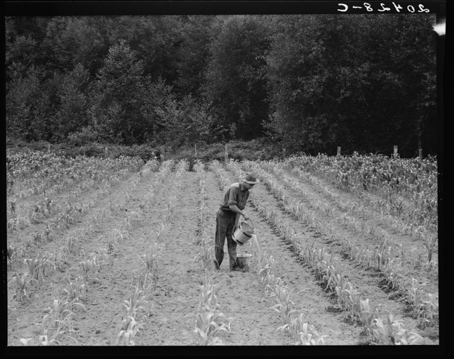 Western Washington, Grays Harbor County, northeast of Elma. Hand irrigation on small rented subsistence farm. Family have been on place for one year