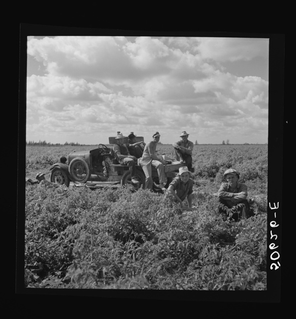 White foreman and helpers in tomato field during lunch hour. Homestead, Florida