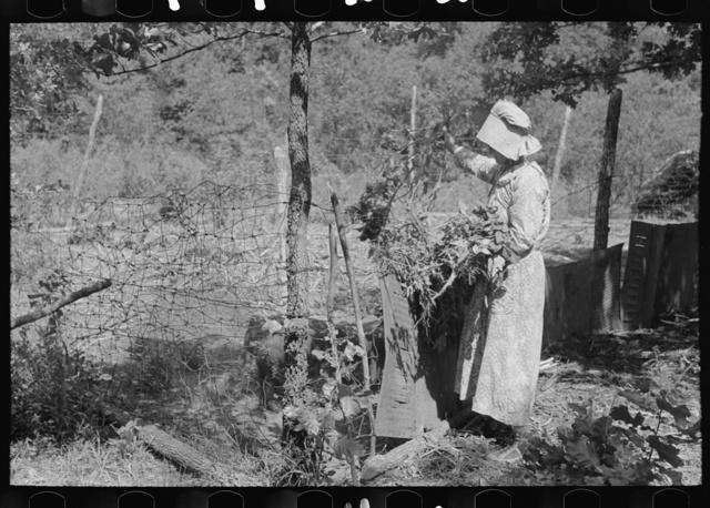 White woman, tenant farmer, feeding weeds to her hogs, McIntosh County, Oklahoma