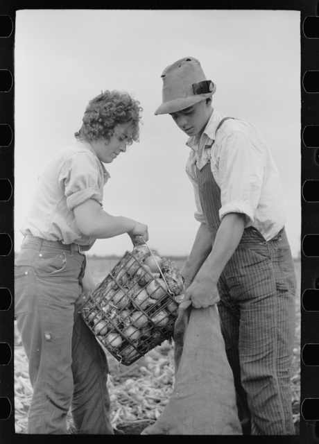 Young onion field worker, Rice County, Minnesota