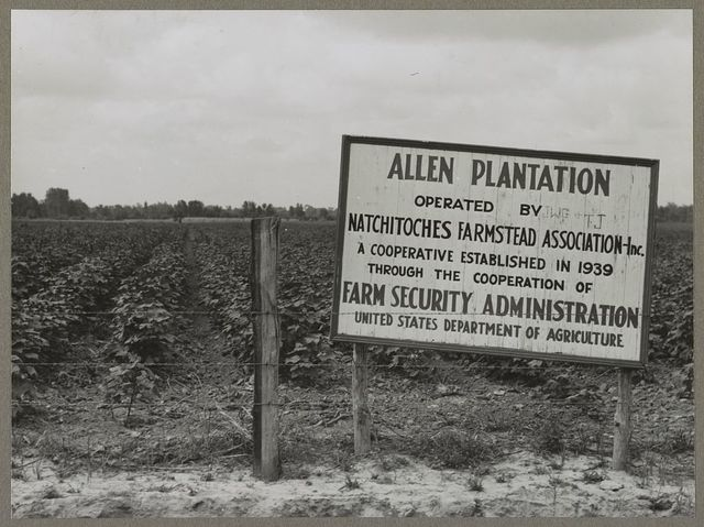 Allen Plantation operated by Natchitoches farmstead association, a cooperative established through the cooperation of the FSA (Farm Security Administration). Louisiana