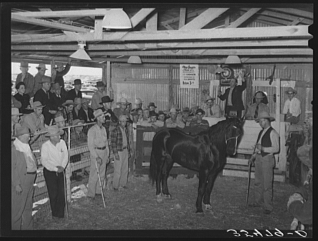 Auction of horses at San Angelo Fat Stock Show, San Angelo, Texas. The breeding and raising of fine horses is a part of the cattle industry. They are used not only as show horses and as saddle horses but also each cowboy on a ranch has a string of from five to a dozen horses for his own use in ranching activities
