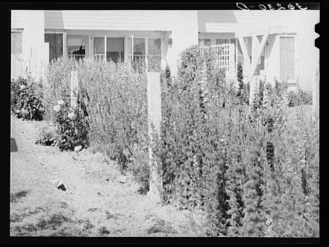Backyard of apartment house at the Arizona part-time farms. Chandler Unit. Maricopa County, Arizona