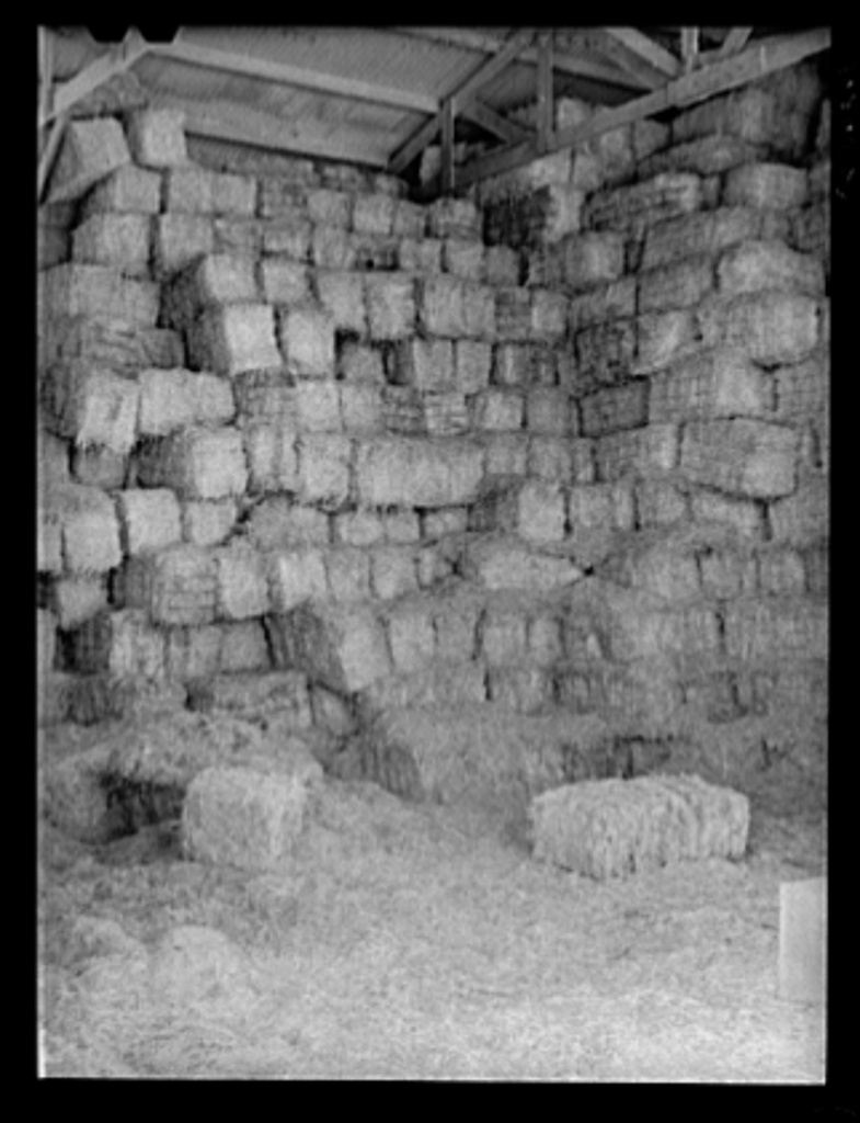 Baled hay stored for cattle feed at the Casa Grande Valley Farms. Pinal County, Arizona