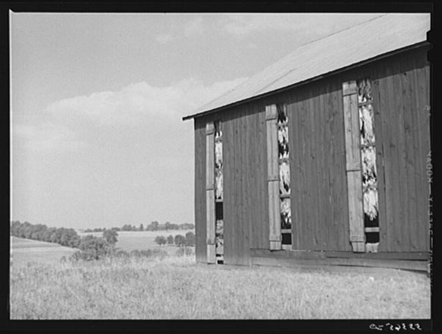 Barn full of tobacco on Russell Spear's farm near Lexington, Kentucky