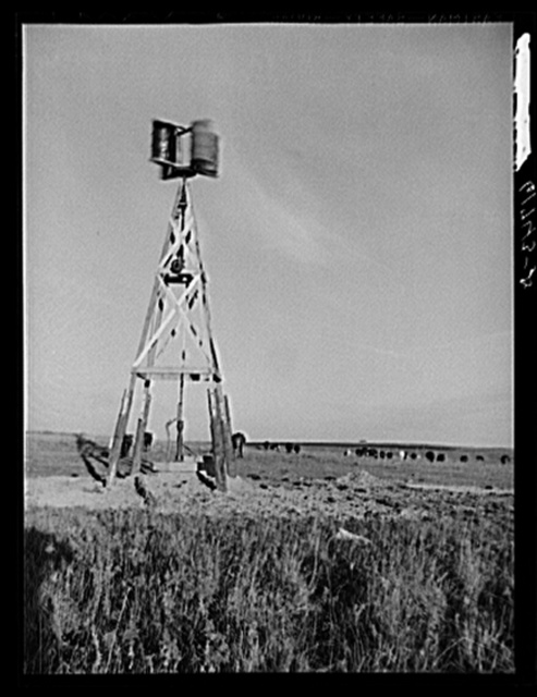 Cattle grazing. Roberts County, South Dakota. Windmill made of old barrel halves and Model T motor
