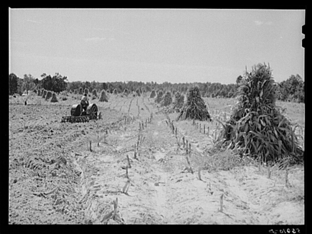 CCC (Civilian Conservation Corps) boys seeding and preparing a meadow strip for terrace outlet on property of FSA (Farm Security Administration) borrower E.O. Foster. Caswell County, North Carolina