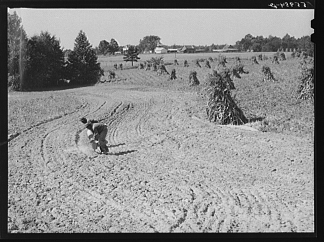 CCC (Civilian Conservation Corps) boys seeding and preparing a meadow strip for terrace outlet made on property of FSA (Farm Security Administration) borrower E.O. Foster. Caswell County, North Carolina