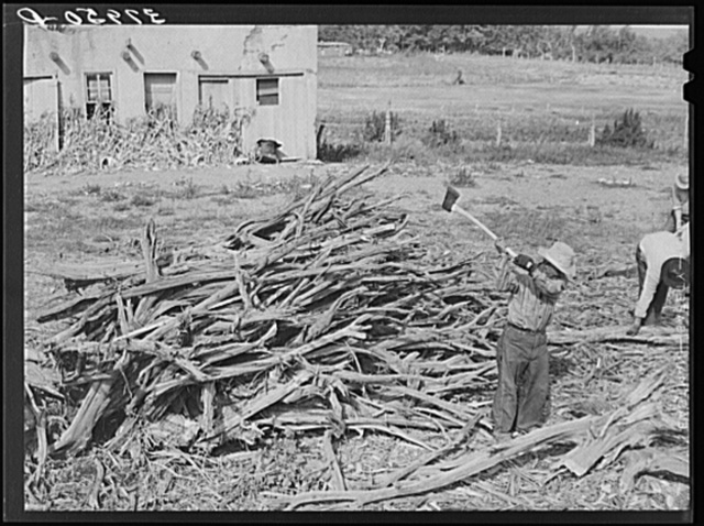 Chopping wood for winter fuel. Concho, Arizona