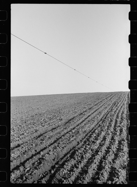 Corn planting wire held taut over a slope in the land. The planter drops corn at the buttons which are three and one-half feet apart. Jasper County, Iowa