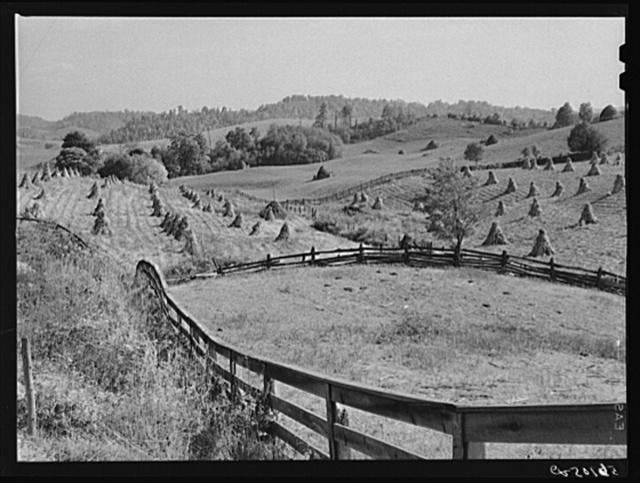 Cornshocks and fences on farm near Marion, Virginia