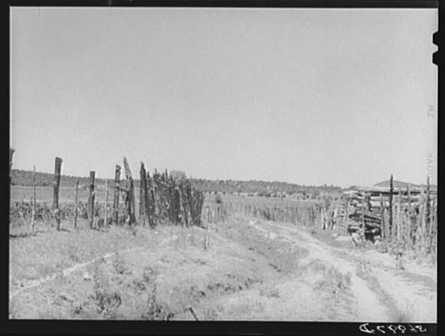 Country land, irrigation ditch and fences. Chamisal, New Mexico