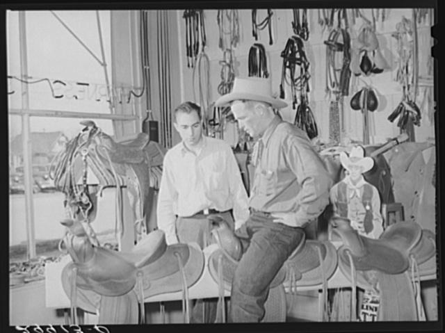 Cowhand trying saddle. Saddlery, Elko, Nevada
