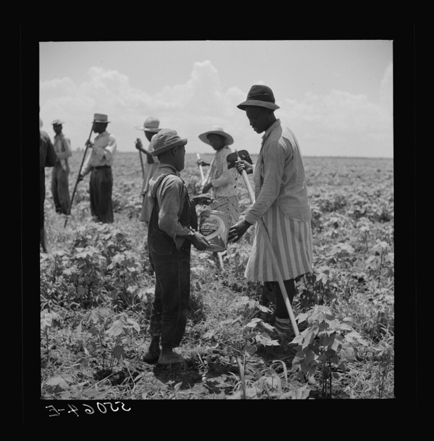 Day labor is used almost exclusively on Hopson plantation, displacing the old tenants on the place. Cotton choppers are hired in nearby towns for seventy-five cents to one dollar a day and trucked to the plantation. Clarksdale, Mississippi Delta, Mississippi