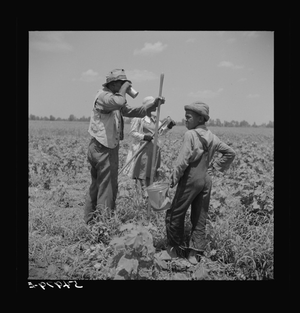 Day labor now is used almost exclusively on Hopson Plantation, displacing the old tenants on the place. Cotton choppers are hired in nearby towns for seventy-five cents to one dollar a day and trucked to the plantation. Clarksdale, Mississippi Delta, Mississippi