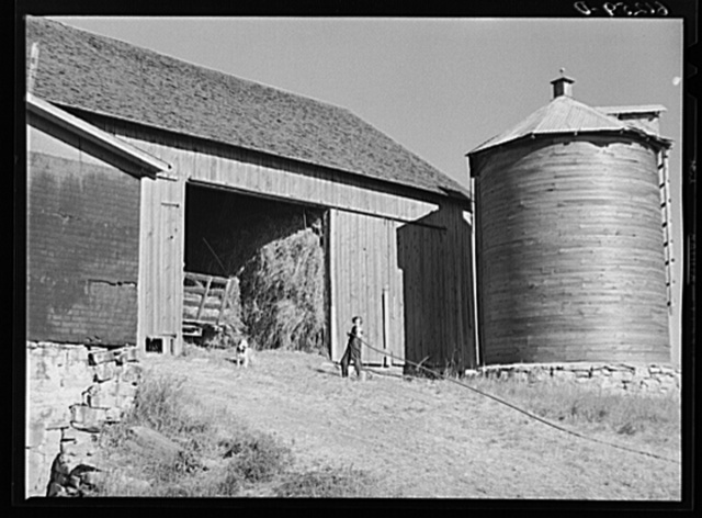 Dragging back rope during process of loading hay into loft by means of pulley and team of horses. Door County, Wisconsin